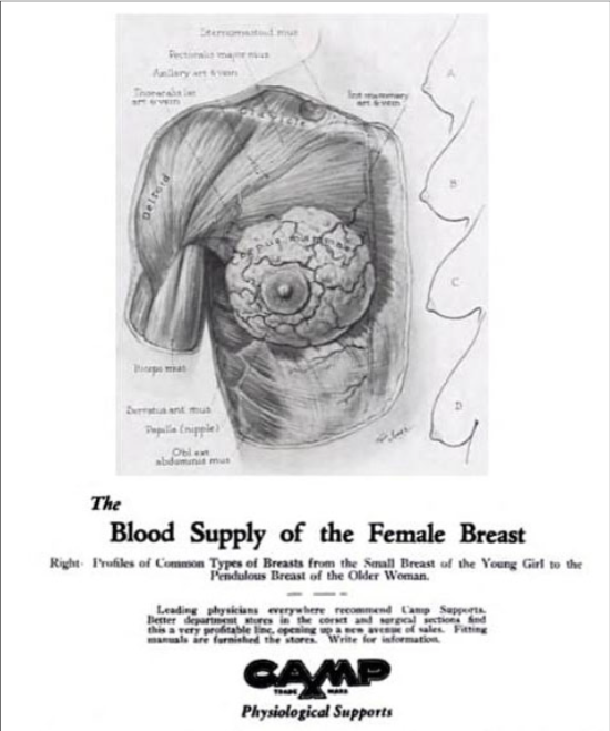 Scan of a 1933 advertisement by S.H. Camp and Company, which depicts an illustrated breast. Bra cups